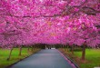 1163684-spring-season-pictures-wallpapers-2880x1620-for-1080p